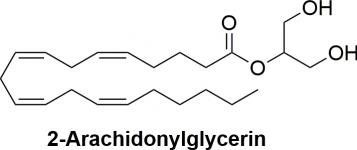2-Arachidonylglycerin