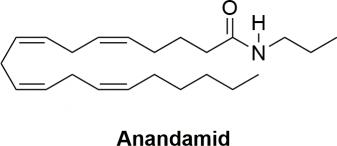 Strukturformel von Anandamid