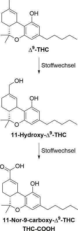 Stoffwechsel des THCs im menschlichen Körper