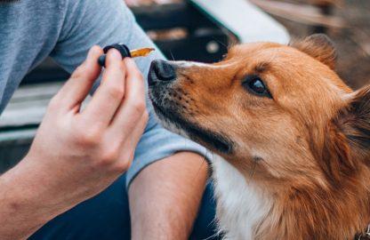 Hund mit einer Tropfpipette
